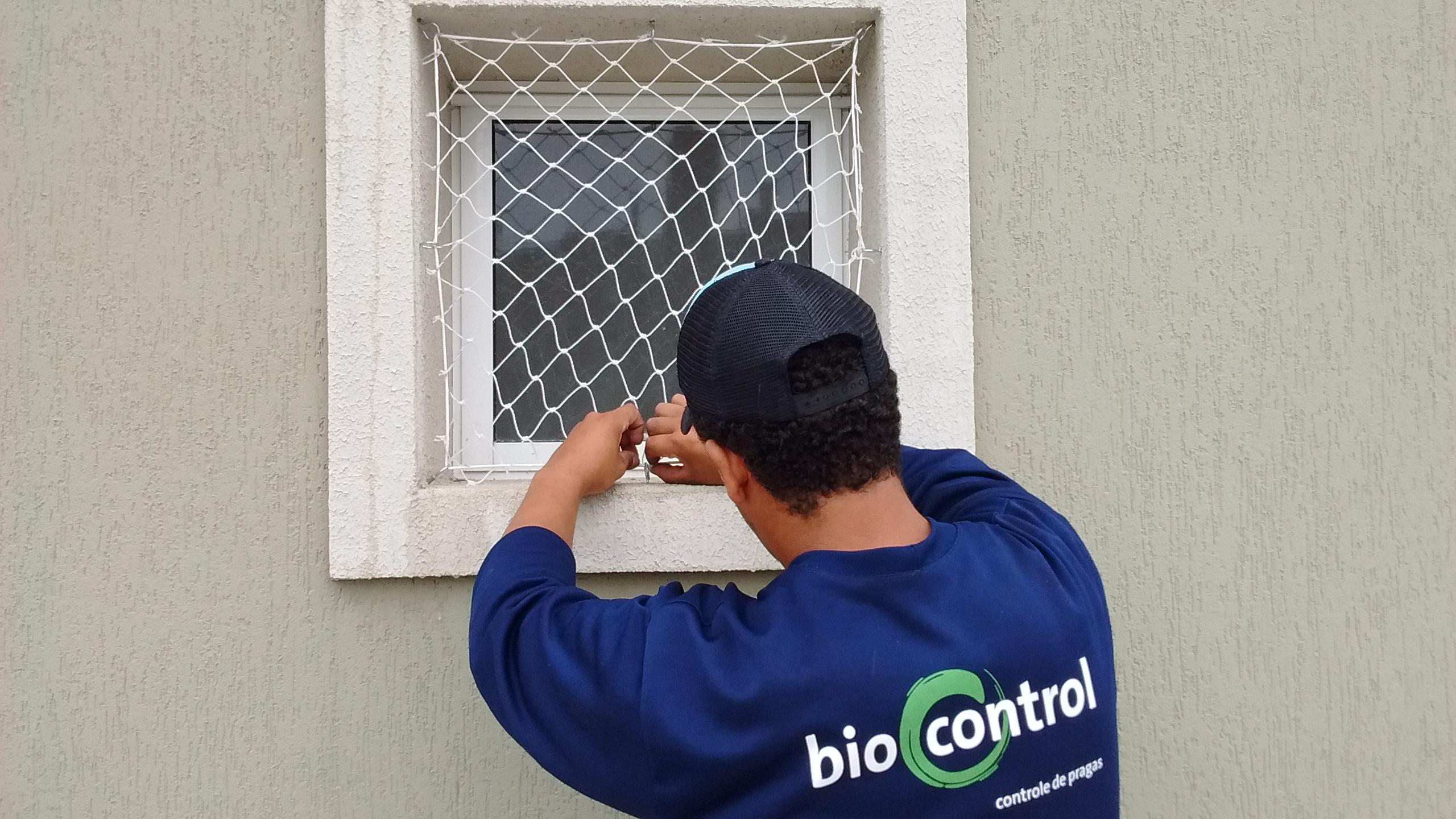 controle de pombos Curitiba