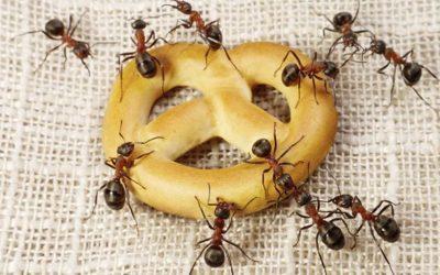 Cuidado com as Formigas